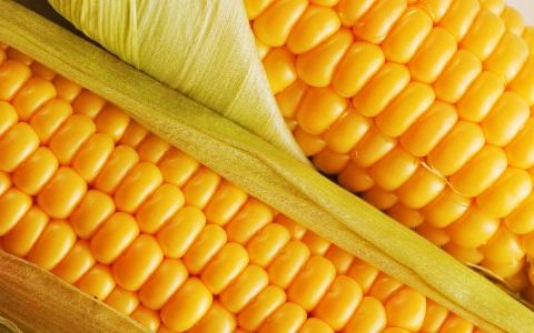 Бизнес – идея: горячая кукуруза