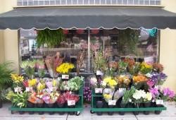 Красивая бизнес-идея: открываем цветочный магазин