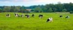 Эко ферма-как правильно организовать данную бизнес идею