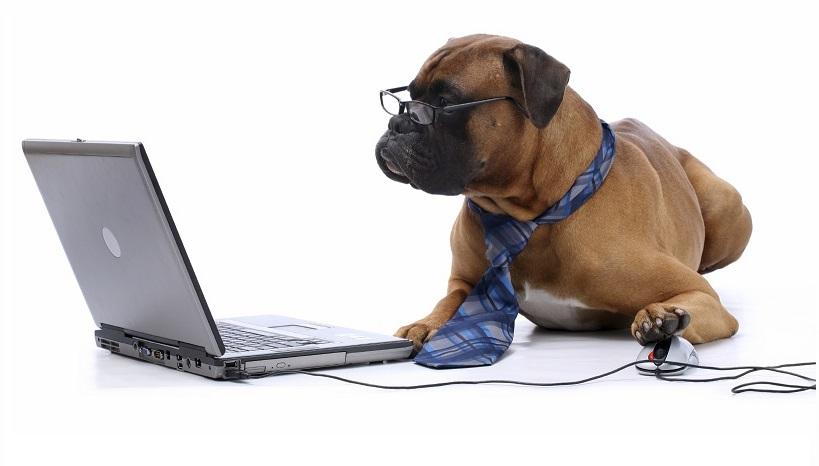 бизнес на животных, бизнес в фото, бизнес идеи, свое дело, франшиза, как заработать денег, малый бизнес, идеи малого бизнеса, бизнес на дому, бизнес план, бизнес с нуля