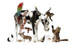 Как заработать на животных, 9 ярких бизнес-проектов