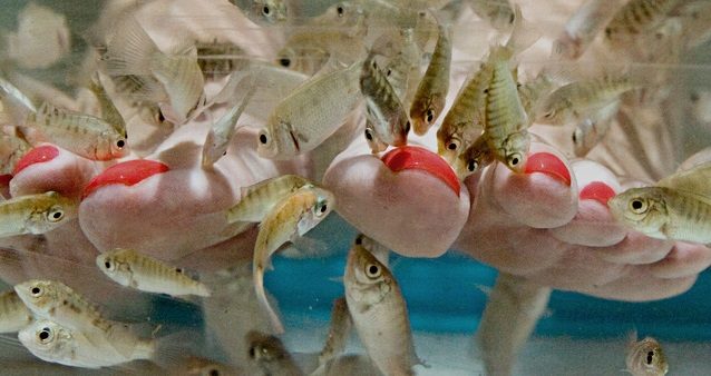 Экзотическая бизнес идея-fish пилинг рыбками гарра руфа