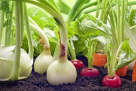 бизнес идеи, агробизнес, экопродукция, бизнес с нуля, свое дело, как заработать деньги, бизнес на дому, новый бизнес, натуральные продукты, экологически чистые продукты