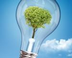 Новые технологии в бизнесе как получить электроэнергию с помощью растений