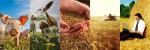 Сельский бизнес-10 идей малого бизнеса