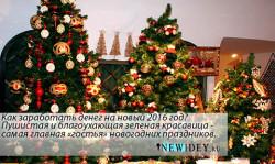 Как заработать денег на новый 2016 год? Сезонный бизнес-продажа новогодних елок