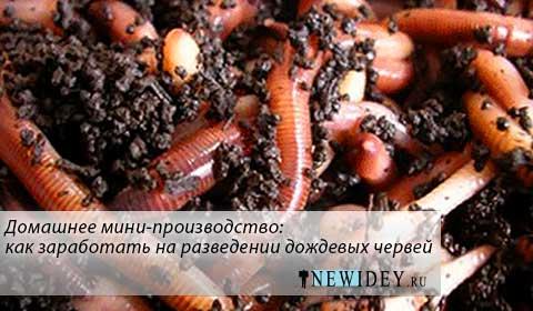 Домашнее мини-производство: как заработать на разведении дождевых червей
