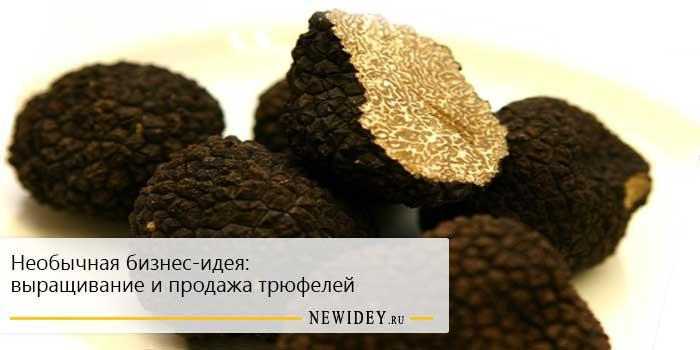 Необычная бизнес-идея: выращивание и продажа трюфелей
