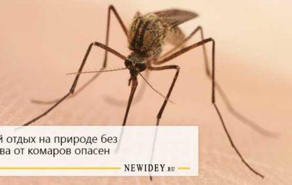 Летний отдых на природе без средства от комаров опасен