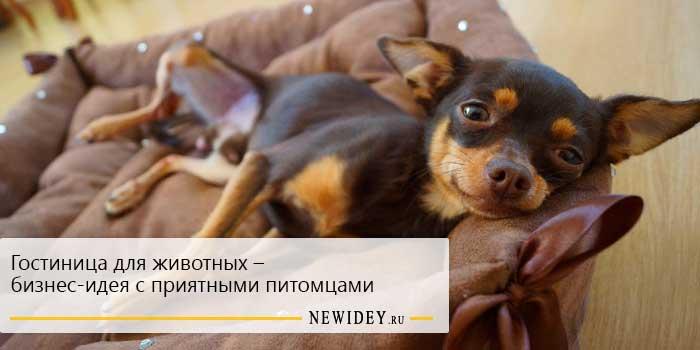 гостиница для животных бизнес идея с приятными питомцами