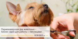 Парикмахерская для животных – бизнес-идея для работы с питомцами