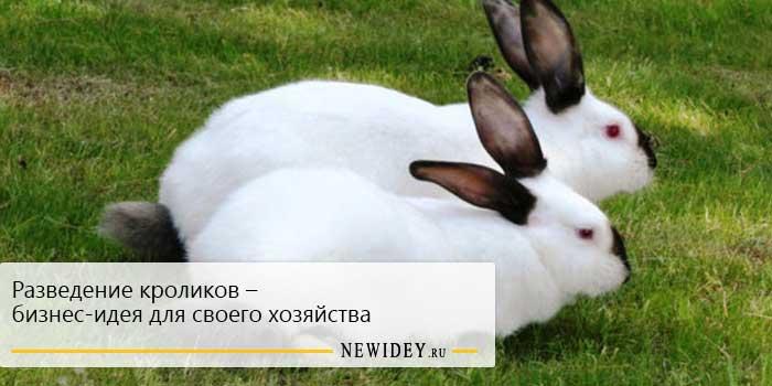 Разведение кроликов – бизнес-идея для своего хозяйства