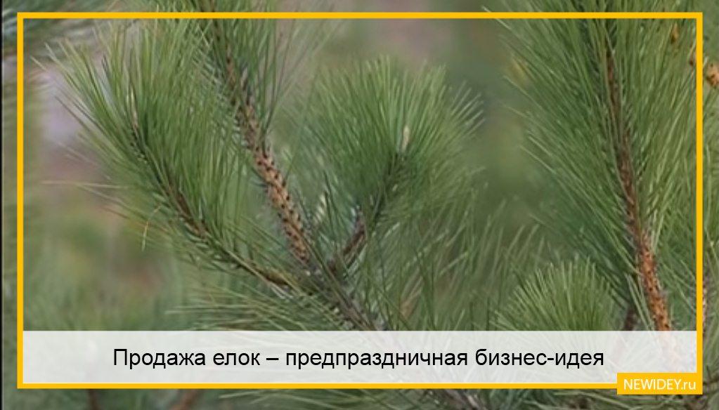 продажа елок в Москве
