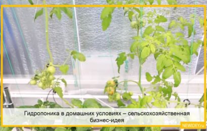 Гидропоника в домашних условиях – сельскохозяйственная бизнес-идея