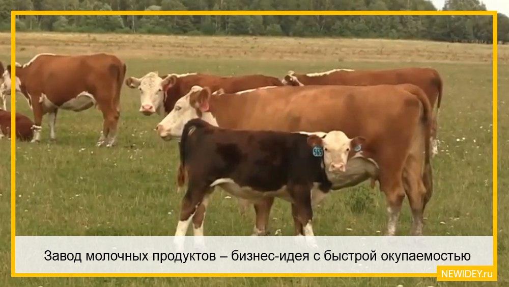 цех производства молока