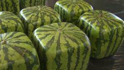 Продажа фигурных фруктов – бизнес-идея 21 века